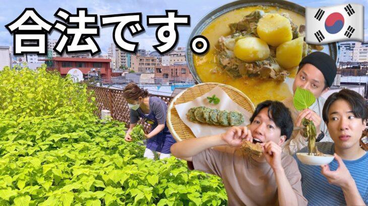 【韓国料理】新大久保の裏側…!合法的楽園で食らうカムジャタン様は桁違いにFRESHでぶっ飛ぶで。これは、事件です!【モッパン】テーハンミング